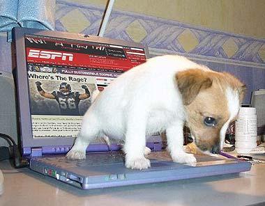 dog peeing on espn.com