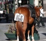 horse butt out of service
