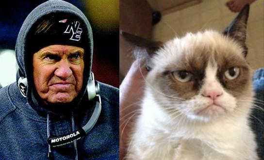 bill belichick grumpy cat