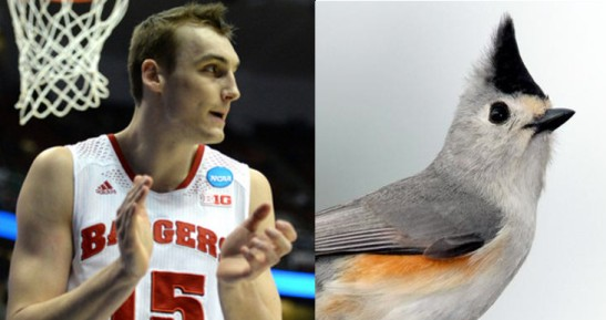 sam dekker titmouse